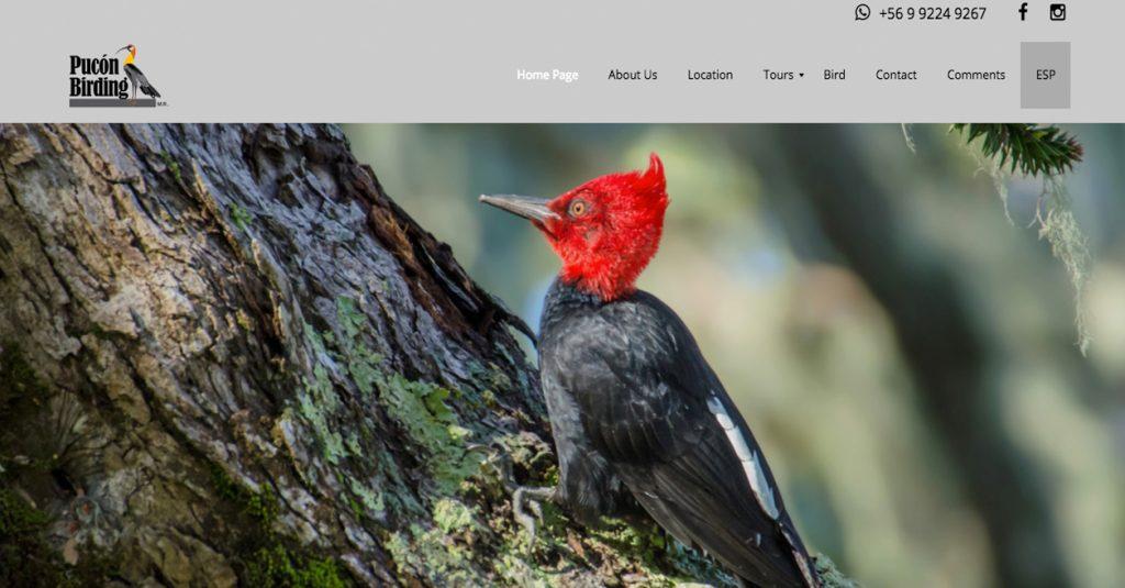 Pucón Birding